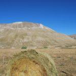 Fields in Castelluccio