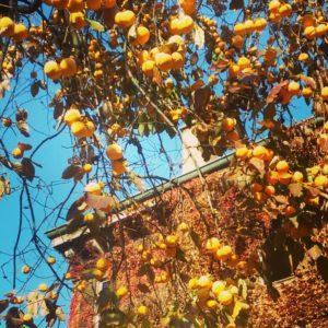 Milano: l'orto botanico di Brera