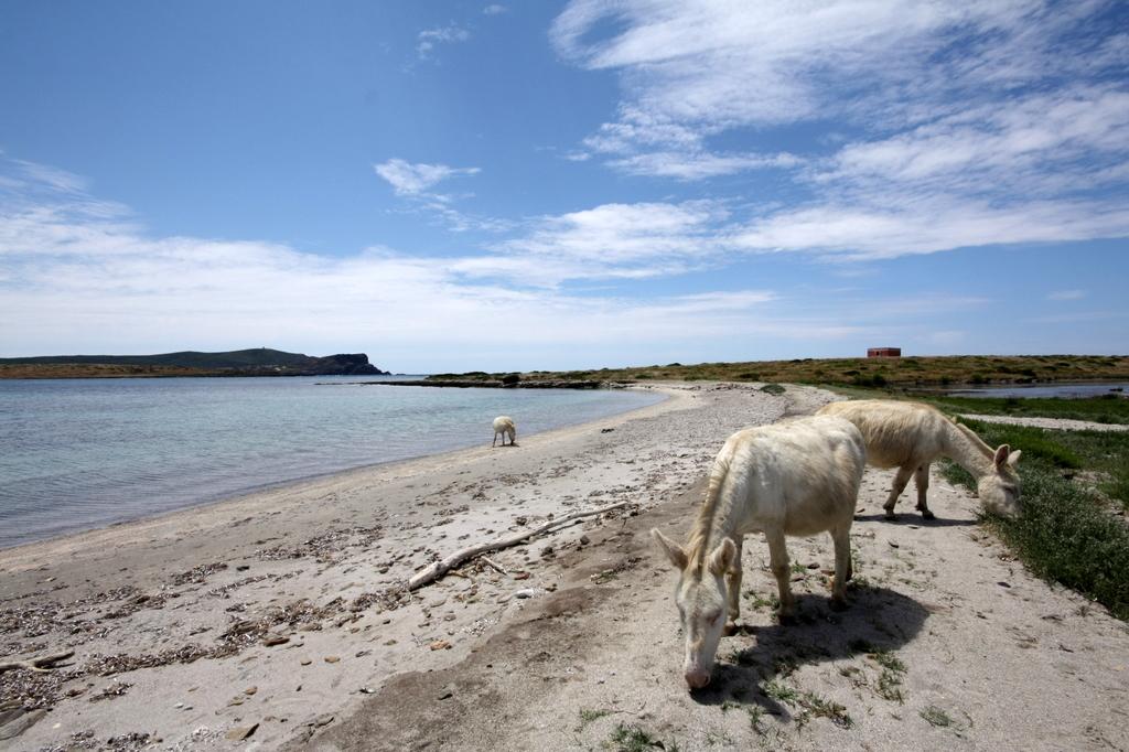 Cavalli selvaggi in Sardegna, Immagine di Flickr User Roberto Cossu (asibiri)