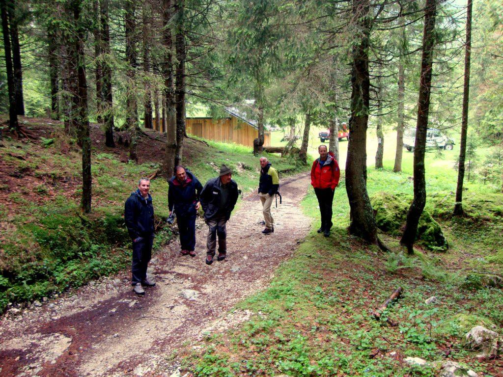 Camminando nel Bosco del Cansiglio