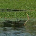 Governolo, river Mincio