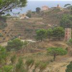 Panorama Gorgona