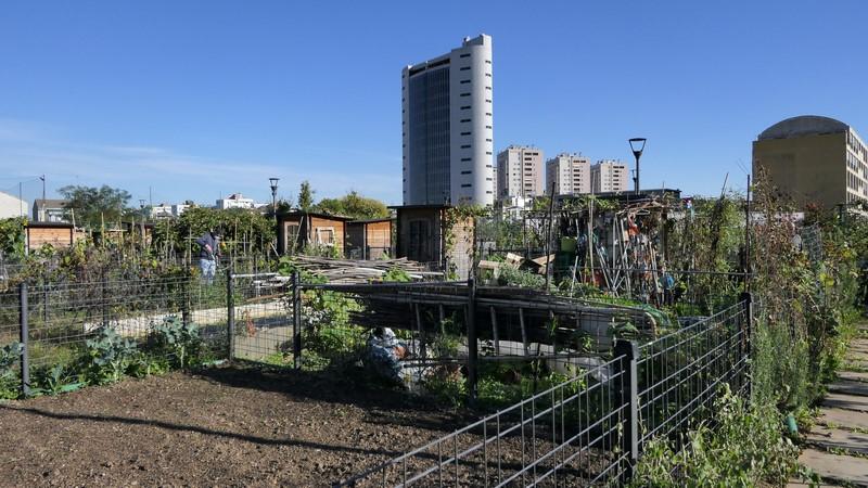 Orti urbani a Quartoggiaro