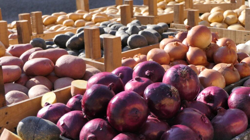 Le varietà di patata e di cipolla