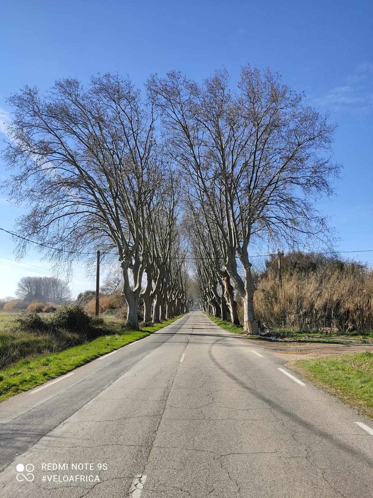 Viale alberato per Arles