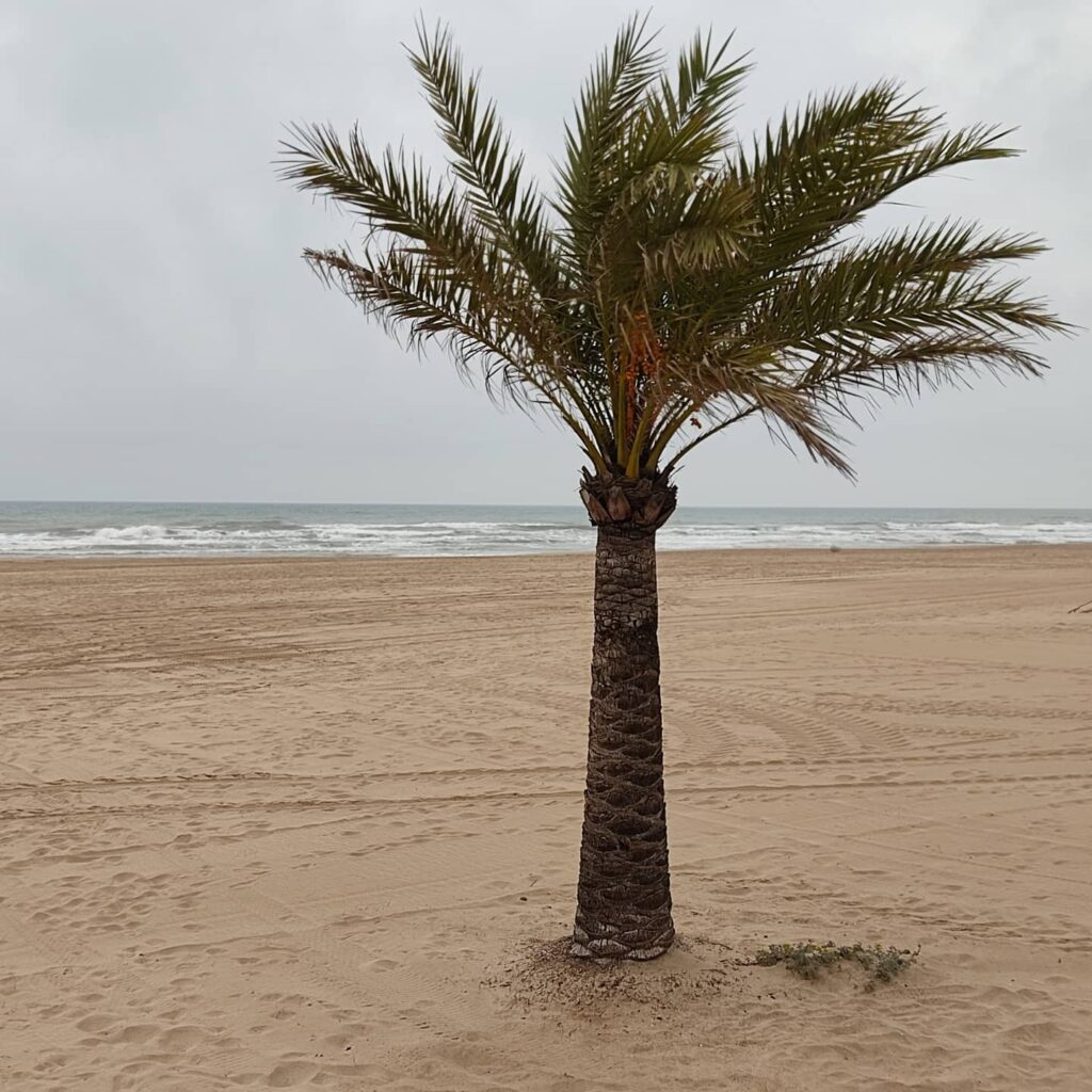 Spiaggia di Dénia
